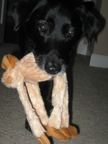 Buddy carries his monkey all over the house.  He makes me laugh!