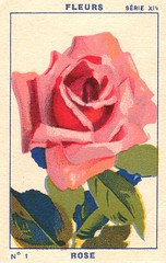 milliat fleurs003
