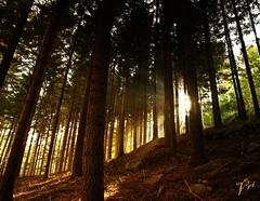 Fbula (Azulada_) Tags: light sun tree luz sol forest arbol nikon bosque otoo 2009 autumm tardor montseny azulada sortidazz d300s