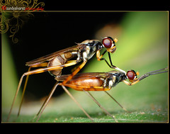 [procreate] ([sundylicious]) Tags: macro love nature insects upcloseandpersonal nikond40 sundylicious