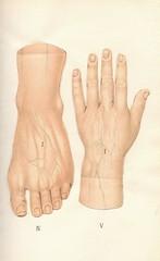 atlas anatomie 7