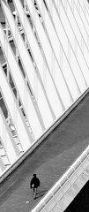 So lonely (Manu Arjó) Tags: bridge santiago sea bw españa white black byn blanco home lines silhouette golf walking de puente bay mar blackwhite spain gulf country negro bn bin calatrava pont lonely silueta blanc bizkaia basque vasco euskadi solitario hombre vizcaya negre pais golfo lineas caminando blanconegro espanya cantabrico biscay ondarroa solitari basc cantabrian blancnegre linies cantabric biscaia itxas caminant bizkaiko itsas aurre leaartibai golkoa avuithasregalatamblesetiquetesehd