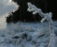 (:Linda:) Tags: germany village hoarfrost thuringia raureif icecrystal rauhreif brden