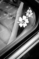my car #1 (jessimedia) Tags: flowers usa white black flower window car honda accord photography photo washington photos wa decal