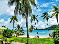 Coconut trees... (jendayee) Tags: blue trees sea sky beach clouds warm coconut martinique sunny caribbean newgoldenseal