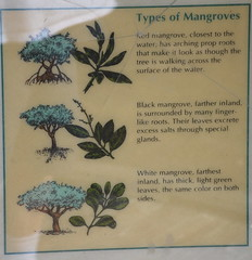 Types of mangroves