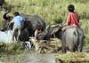 RICEFIELD (Charlie Saceda) Tags: farming harvest ricefield photojournalist southernphilippines zamboangadelsur charliesaceda westernmindanao labangan