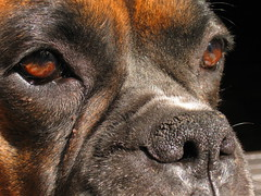 Los ojos del perro...