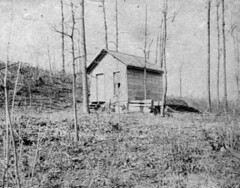 Off Campus Housing, circa 1901 (Michigan State University Archives) Tags: buildings michiganstateuniversity cabins offcampus