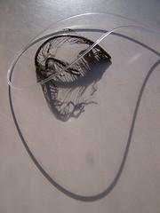 light entrapment (YAZMDG (15,000 images)) Tags: light shadow blackandwhite bw plant fern forest leaf noiretblanc nb lumiere nsw luce yaz obscur nidus asplenium lightdark obscurite arffern yazminamicheledegaye northernriversspecies yazmdg ystudio