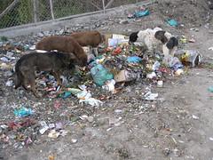 IMG_1239 (piwdw) Tags: wild dogs by kashmir ara nusrat