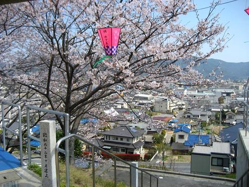 広島 桜 名所 9