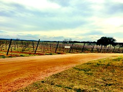 A Vineyard in Texas Hill Country (Cesar's iPhoneography) Tags: cameraphone trees sky sun sunlight tree green grass leaves lines stone skyline clouds fence landscape outside outdoors golden daylight vineyard woods scenery day branch texas afternoon open view wine cloudy earth path branches horizon scenic naturallight ground scene hills winery trail craggy earthy wires shade grapes vegetation hillcountry skyward fredericksburg shrubs hilly slanted gravel gnarled waveform fenceposts iphone fredericksburgtexas lonestarstate texashillcountry centraltexas woodedarea iphoneography