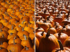 Pumpkins: Color & Form
