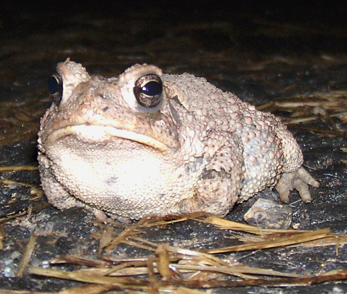 toad up close