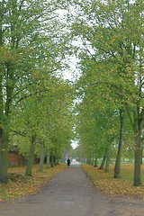 An avenue in autumn (Afgil (see profile)) Tags: uk autumn trees england london leaves alone paths avenue nationaltrust solitary middlesex hounslow osterley osterleypark isleworth londonboroughofhounslow pathscaminhos peopleandpaths