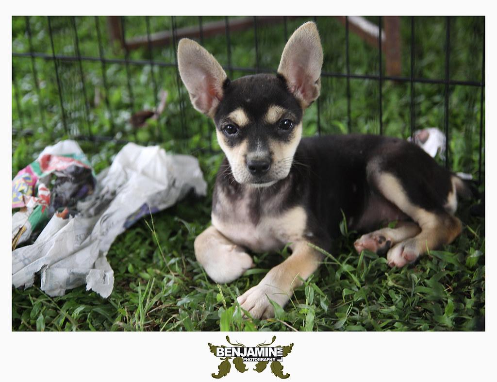 dog_adopt5