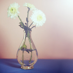 Los colores de mi colegio. (www.juliadavilalampe.com) Tags: stilllife flores getty prueba gettyimages celeste frasco prove naturalezamuerta rosado urin antigedad orina chaulafanita juliadavila juliadavilalampe
