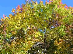 Fall Colors Boulder   DSCN0103