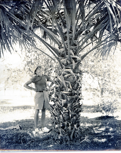 Hugo Curran with a Pholidocarpus palm