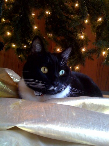 Charlie settled in but still waiting for Santa under the tree
