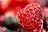 ****~frozen red~**** (light thru my lens) Tags: red macro frozen rojo berries bokeh vermell moras cosina100mmf35 frutosdelbosque congelats fruitesdelbosc mòres