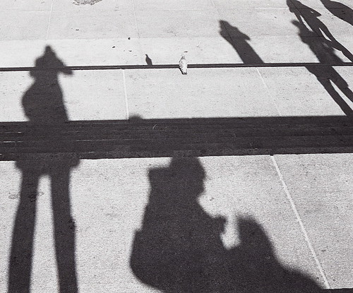 a pigeon in shadowland