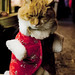 Christmas's Cat par Helowdy