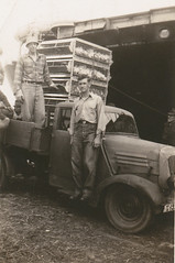 Chicken delivery truck, Poland, summer 1946