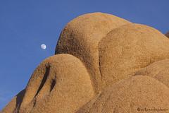 Sunset with moon (sdlawsonphoto) Tags: california sunset moon rock nationalpark desert joshua joshuatree magichour alpenglow joshuatreenationalpark yuccavalley jumborocks 400a canon50d canon70200f4is sdlawsonphoto
