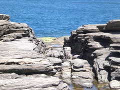 Foca (Lia Porto) Tags: búzios praiadafoca
