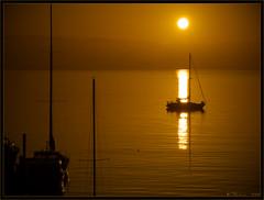 A New Day (Tony Immoos) Tags: sanfrancisco california lighting morning sun sunlight reflection water sunshine sailboat marina sunrise landscape gold golden haze glow treasureisland postcard scenic olympus ripples e3 californialandscape zd sanfranciscocounty 1260mm olympuse3