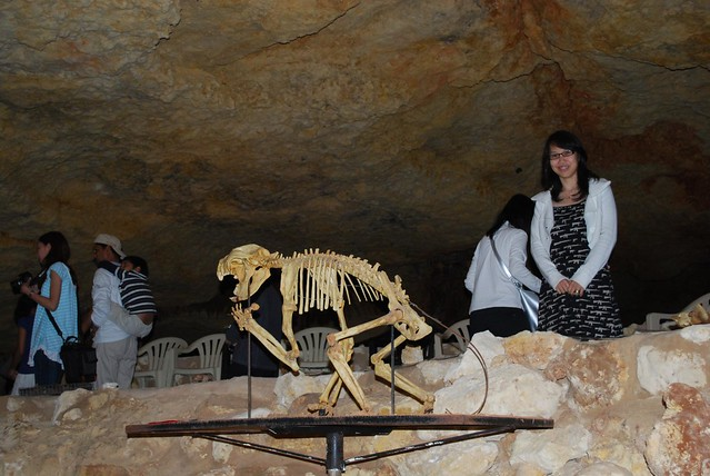 Julia, Thylacoleo fossil - Victoria Fossil Cave