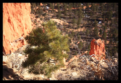 USA SR-63 Bryce Canyon National Park (Stewart Leiwakabessy) Tags: road trees sky people snow cold tree cars nature car animals rock america landscape outside nationalpark highway scenery rocks unitedstates state unitedstatesofamerica freezing scene things nationalforest stewart interstate states brycecanyon scenes hoodoos brycecanyonnationalpark dixienationalforest leiwakabessy stewartleiwakabessy