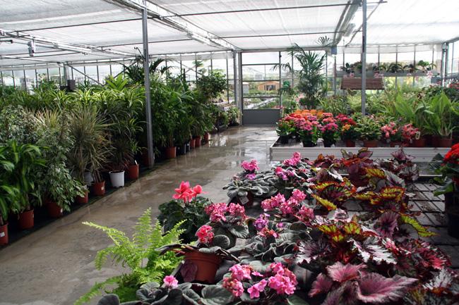 imagen de plantas de interior