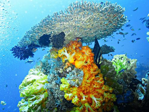 Flores Underwater 22