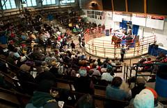 Sold! (jmurphpix) Tags: farmers sale auction iowa livestock joemurphy cattlemen josephlmurphy beefexpo jmurphpix