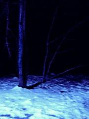 Blue Nightmare (photo_secessionist) Tags: longexposure blue trees winter snow color texture film analog 35mm asahi pentax kodak tripod mybackyard defocused mesuper postprocessing max400 heavypostprocessing soligorf35452880mmzoommacrolens iamsotiredofsnow ihavevitamindforbreakfastnow