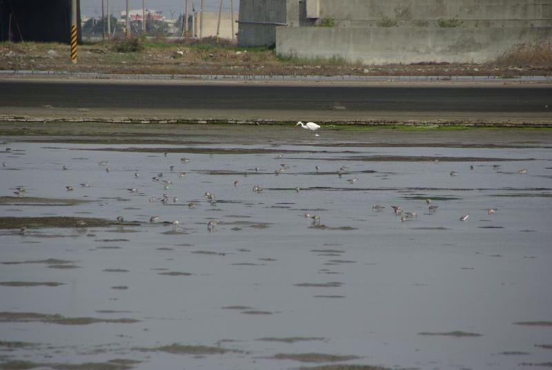 20100220北門七股隨興遊