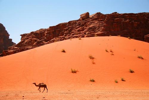 a lone ranger, wadi rum