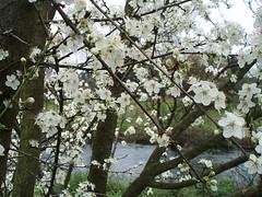 anunciando a primavera