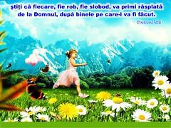 Efeseni 06-08 (Palosi Marton) Tags: kids childrens copii crestine versete biblice