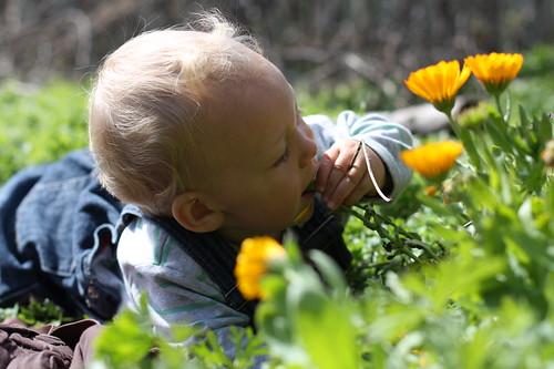 Little gardener 2