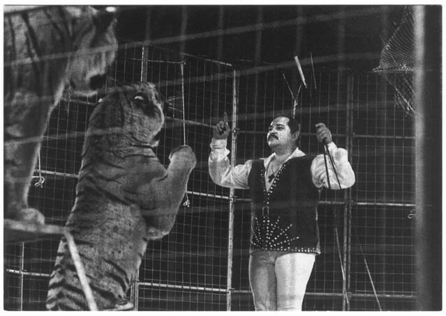 Yann Gruss (Cirque ACHILLE ZAVATTA. 1991)_LAventure Carto (Le Grand Kervi Circus; 92065). Photo Yvon Kervinio