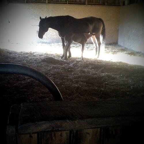 Foal #3