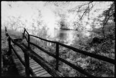 DREAMS (A.Pepe) Tags: trees film darkroom paper nikon kodak fb handmade traditional ponte infrared carta biancoenero laghetto alberti durst hie pellicola carrega stampa infrarosso kentmere boschidicarrega baritata m601 apepe