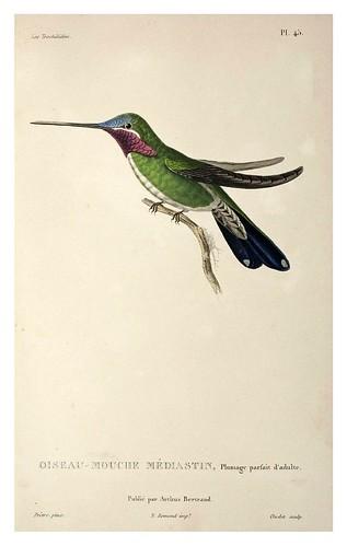 028-Les Trochilidées ou les Colibris et les Oiseaux-Mouches… 1832- René Primevère Lesson- DGZ–Göttinger Digitalisierungszentrum