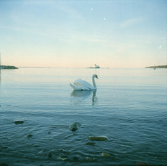 Swan and Ferry (©skarson) Tags: ocean blue bird film norway ferry analog canon norge moss swan europe kodak lubitel2 lubitel portra østfold kodakportra400 potra400 9000f canoncanoscan9000f