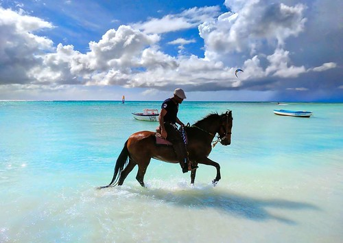 Horse Play In The Water