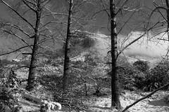 CRW_9651 (gravalosantonio) Tags: oroel peña uruel jaca jacetania huesca españa pirineos invierno nieve